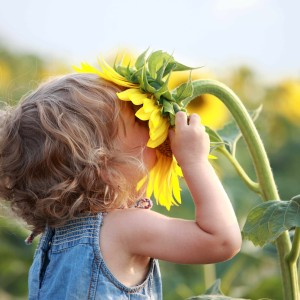 Fotolia girl_smelling_sunflower-1