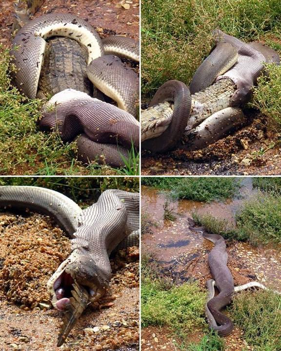 krokodil slang