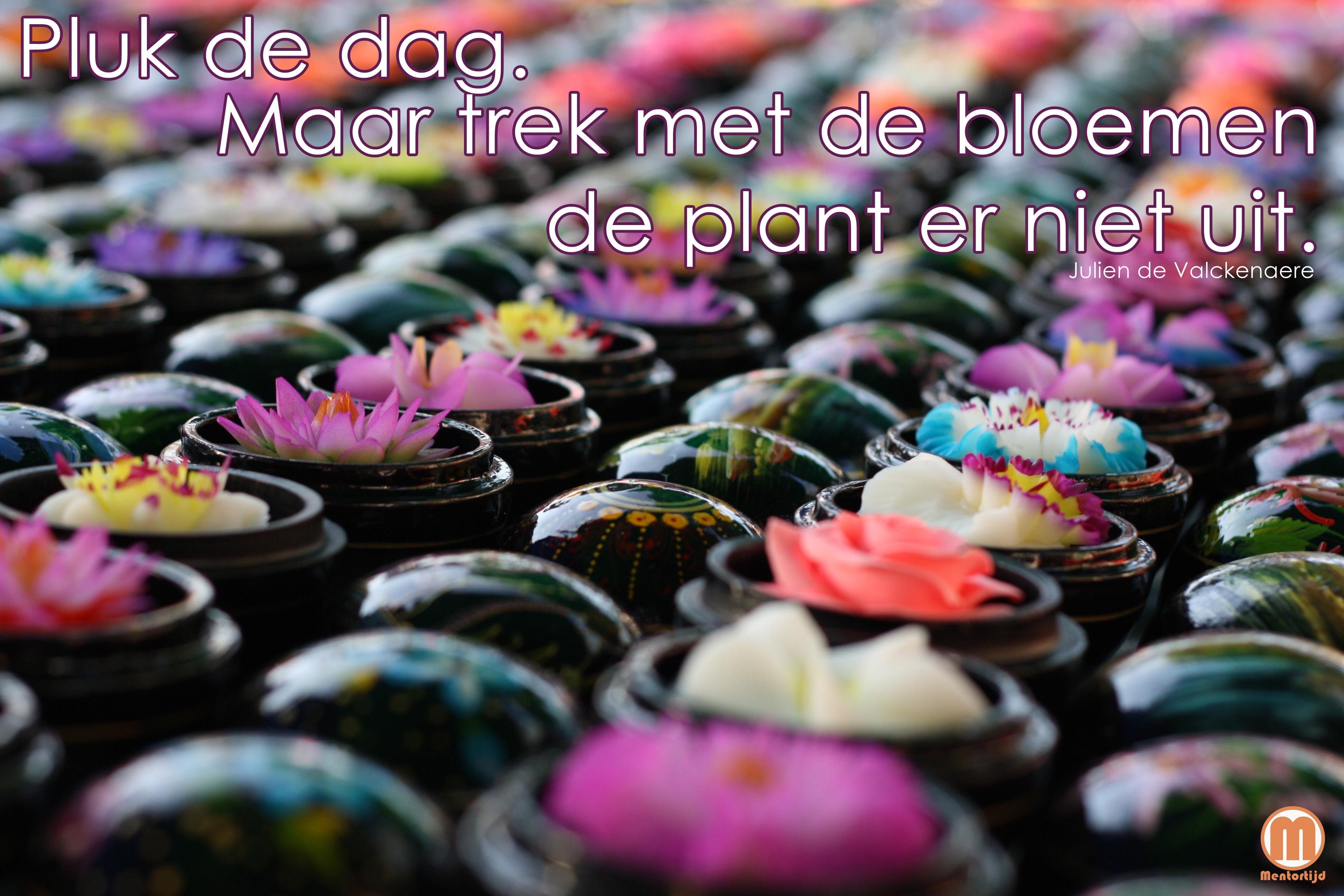 spreuken over bloemen Genoeg Spreuken Over Bloemen XPW 38 | Wofosogo spreuken over bloemen